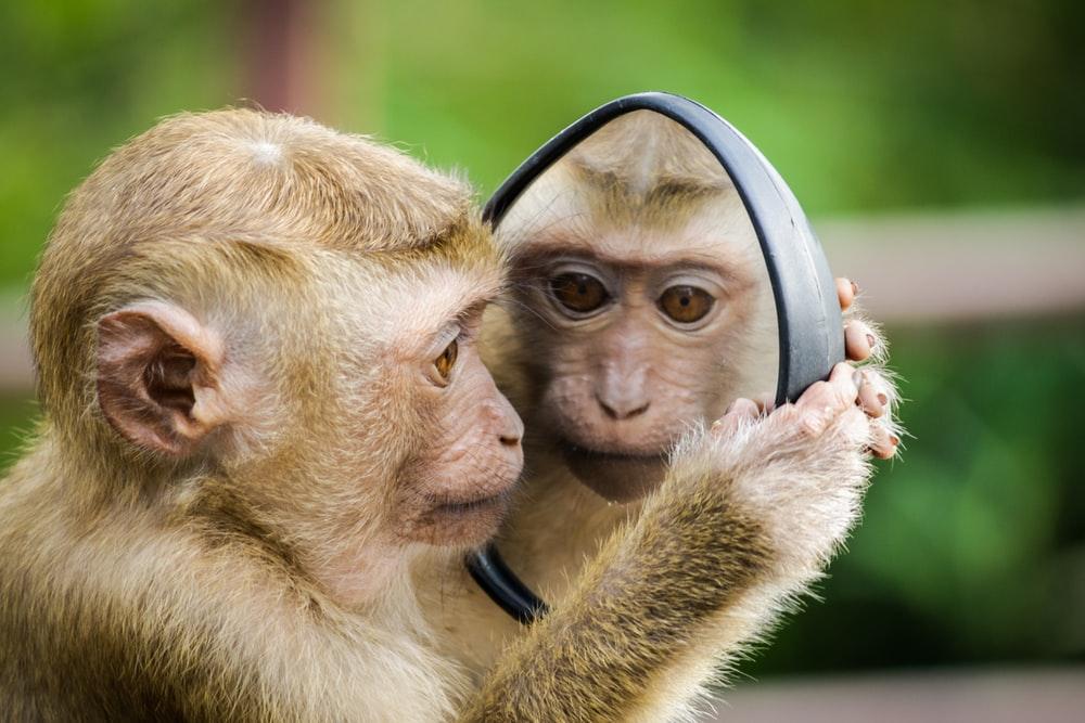 Mơ thấy khỉ