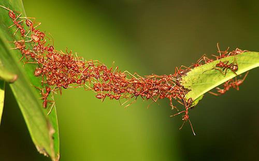 Mơ thấy đàn kiến