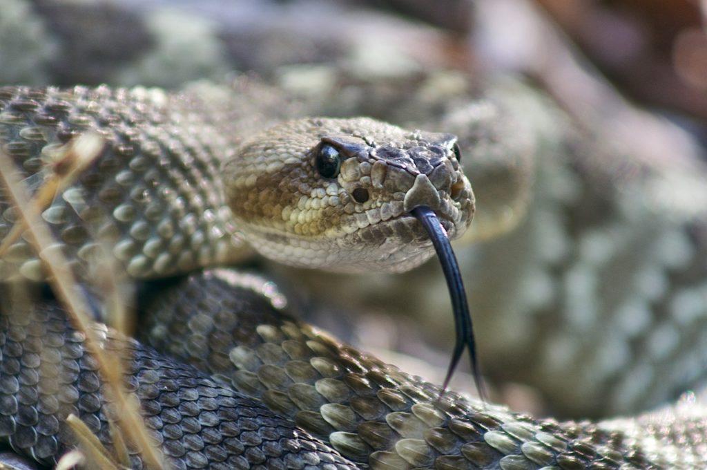 Giải mã giấc mơ thấy những con rắn đen