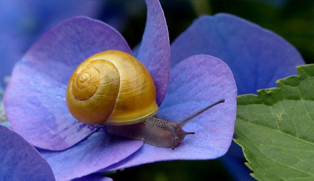 Giải mã giấc mơ thấy ốc sên – Mơ thấy ốc sên là điềm báo gì?